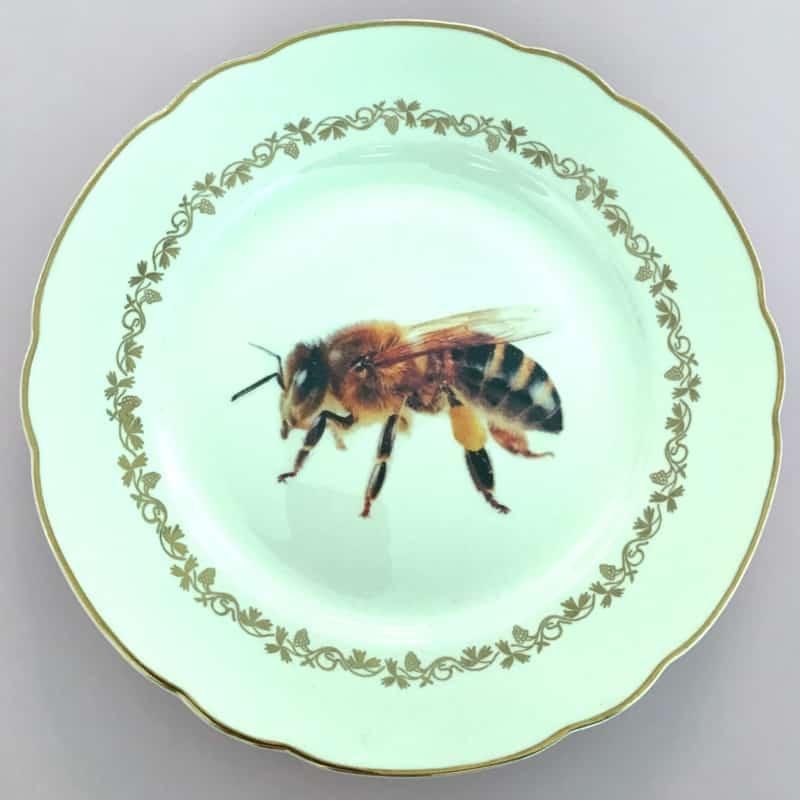 Waarom wespen altijd op jouw bord gaan zitten..